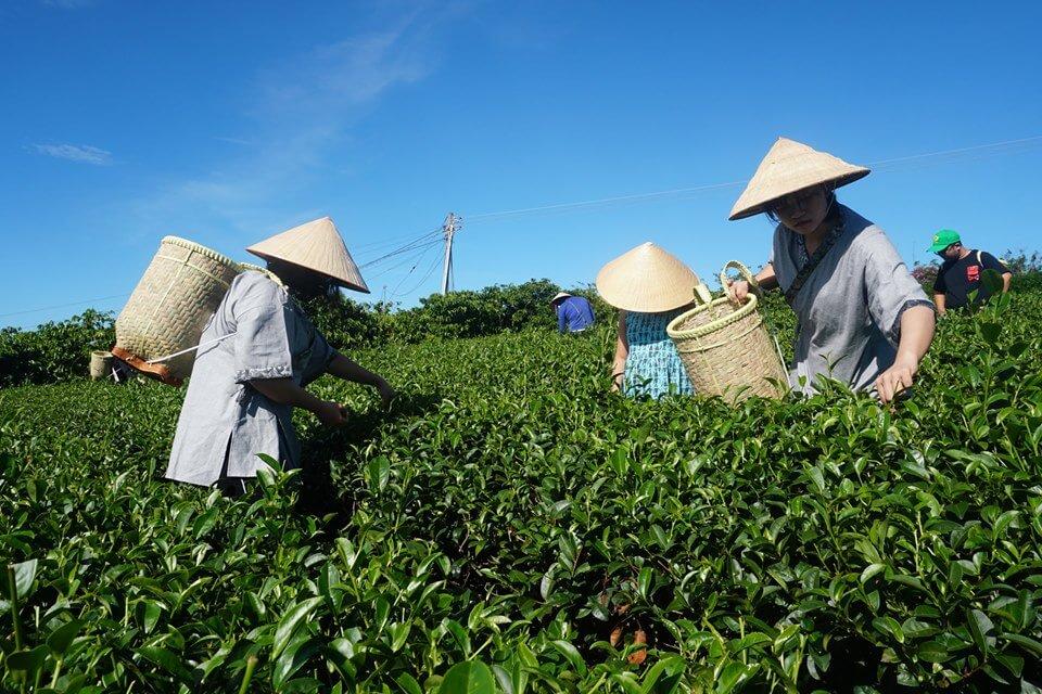 trà ô long trà trái cây